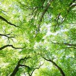 albero_ossigeno